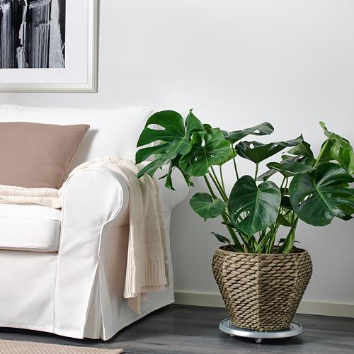 DRUVFLÄDER plant pot